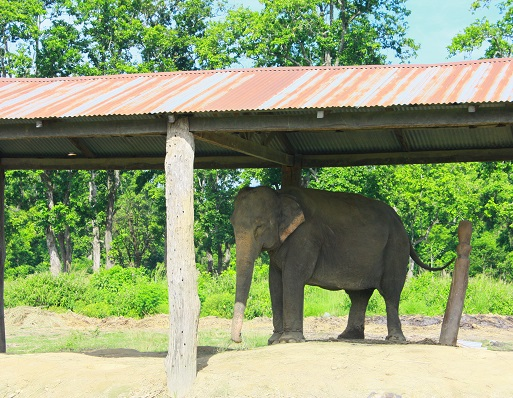 Chitwan National Park: The ultimate travel guide