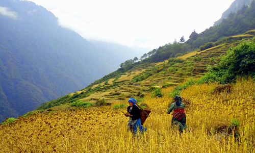 Trek from Ramche to Torongding