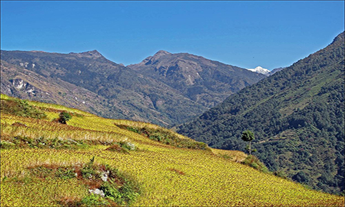 You will now head up to Sele Le Base Camp from Ghunsa which will take you around 4-5 hours of walk.